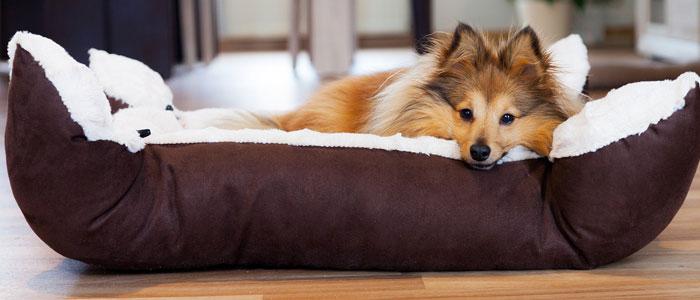 Panier pour chien